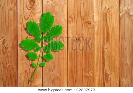 Summer or spring conceptual green leaf on a wood background, ideal for natural seasonal or vintage designs