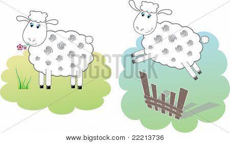 Two white sheeps, vector illustration