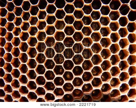Honey Bee Comb