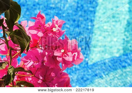 Bougainvillea And Pool - Landscape