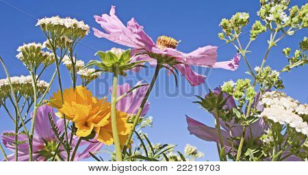 colourful flowers in a meadow