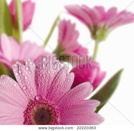 Flowers in spring with dew and white background