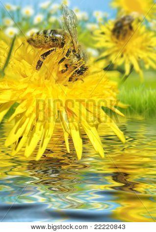 abeja sobre una flor sobre el agua