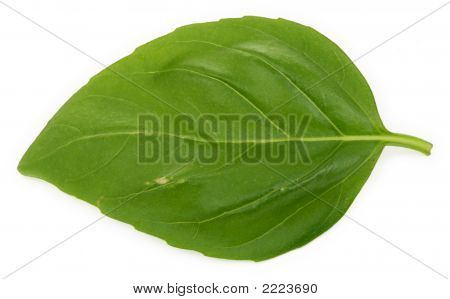 Single Basil Leaf