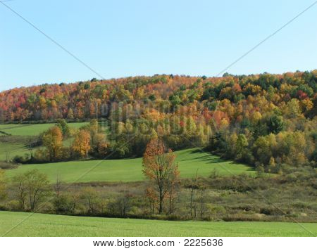 Colorful Fall Autum Hillside