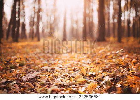 poster of Autumn landscape of October autumn park in sunny weather. Spreading autumn trees with fallen autumn leaves. Sunny autumn landscape view of autumn city park with autumn fallen leaves on the ground