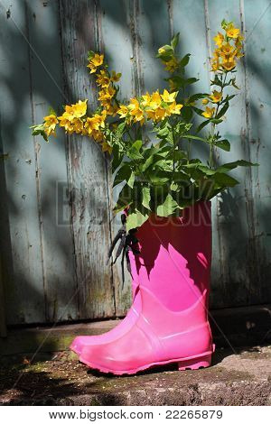 Pink Wellingtons In Front Of An Old Shed