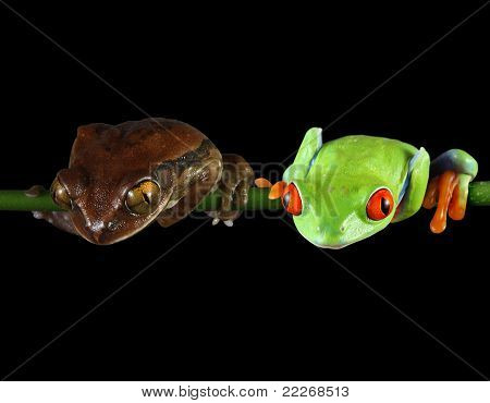 Frog friendship