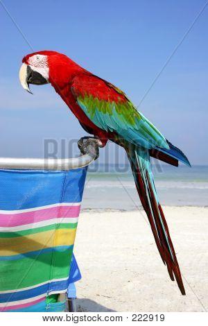 Beach Macaw