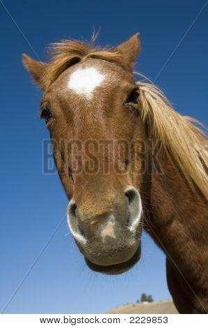 Goofy Looking Horse
