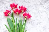 Pink Tulips On Light Textured Background. Simple Tenderness Concept. poster