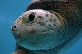 Up close sea turtle