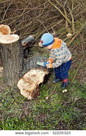 Woodcutter Cutting Broken Tree