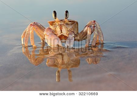 Ghost Crab On Beach