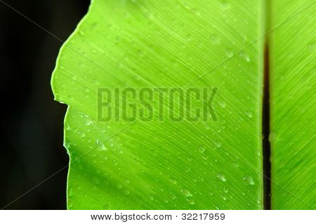 water drop on fern leaf