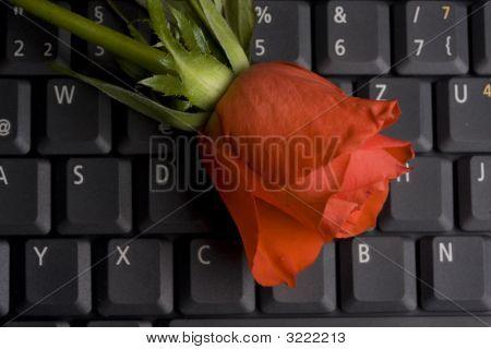 Rose on keyboard