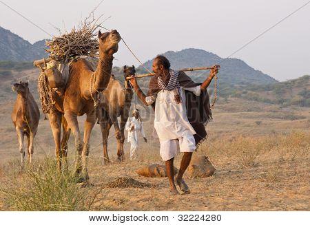 Arriving at the Pushkar Camel Fair