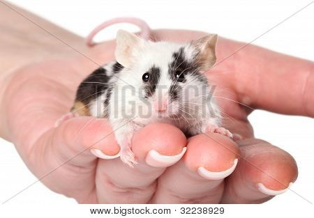 Mouse In Woman Hands