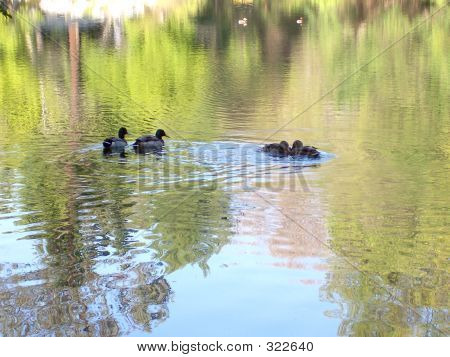 Nature Ctr #1, Ducks, North Lake