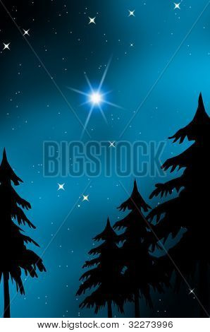 Starry sky over fir trees