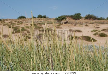 Field On The Sand