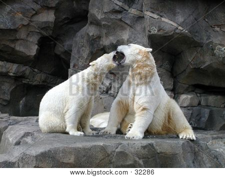 Polar Bears Disagree