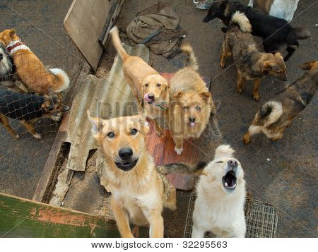 A lot of stray dogs in the shelter