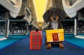 Dog As Pet In Cabin In Airplane poster