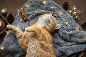 Christmas Mood With Ginger Cat poster