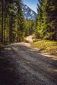 Cycling Through Forest On A Sunny Day. Rocky Road In Forest Nature. Green Forest Road. Nature. Road. poster