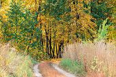 Wonderful Autumn Landscape With Multicolor Leaves. Scenic Fall Foliage On Trees. Yellow Orange Leafa poster