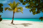 View Of The Palm Tree Through The Natural Framing Of Leaves. Beautiful Caribbean Beach On Saona Isla poster