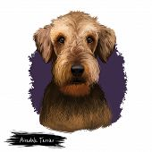 Airedale Terrier Breed Digital Art Illustration Isolated On White Background. Cute Domestic Purebred poster