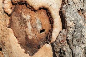stock photo of broken-heart  - Abstract conceptual heart on a tree closeup - JPG