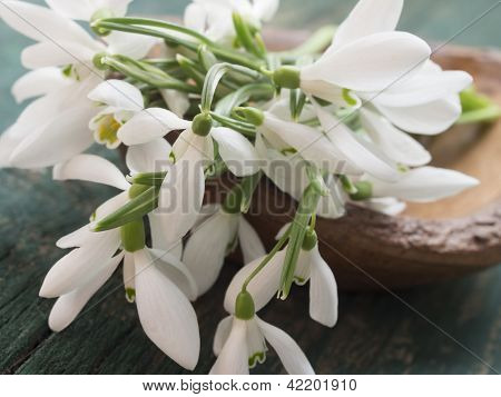 beautiful snowdrops, concept of beginning