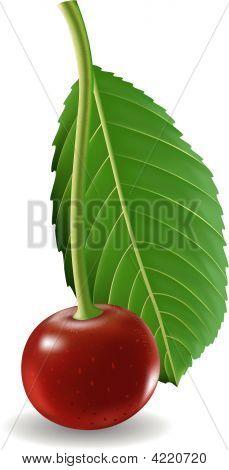 Cherry.Eps