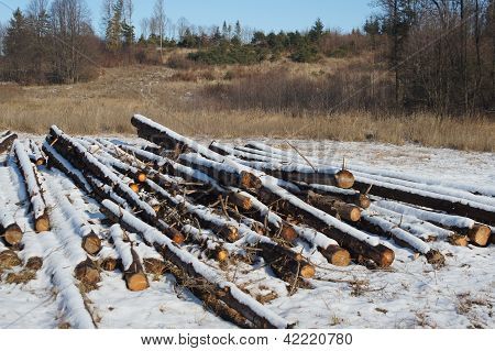 Forest after felling