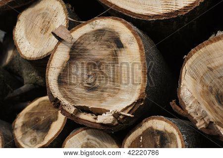 Wood of nut