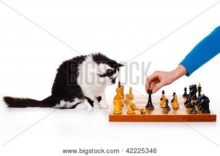 Cat Plays Chess