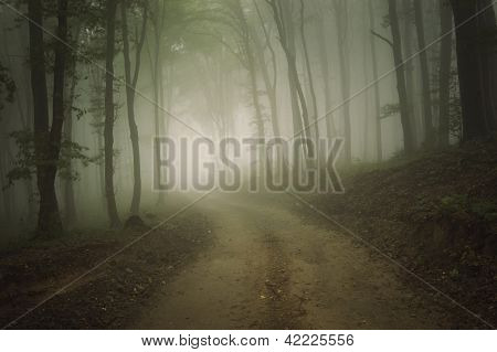 Road in a dark eerie forest with fog