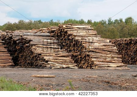 Quebec; Log In A Sawmill In Saint Adalbert
