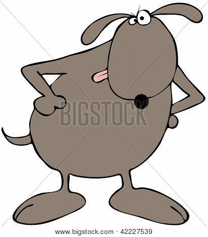 Wary dog