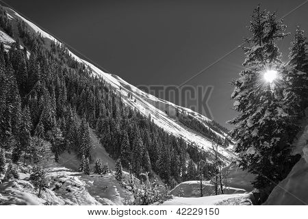 winter landscape with sun shining