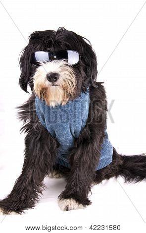 perro y gafas de sol