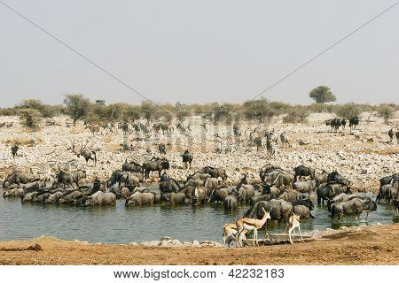 Waterhole in Etosha National Park, Namibia