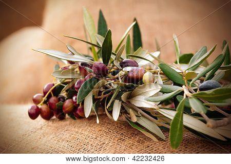 Olives On A Sack