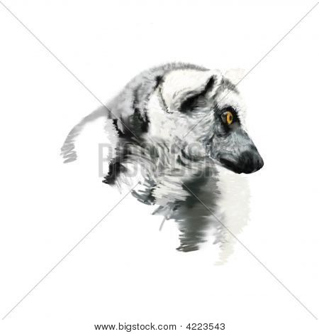 Ringtailed Lemur Portrait