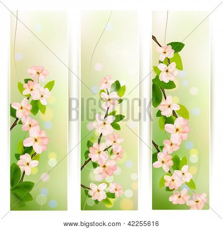 Three nature banners with blossoming tree brunch with spring flowers. Raster version of vector.