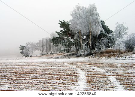 wintery view of ice covered field with rural road and wood