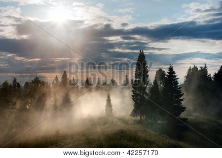 beautiful view of forest with fog and sky with clouds and sun
